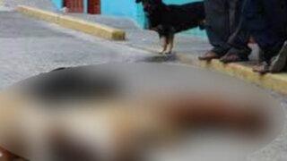Desconocidos envenenan 15 perros en Huánuco