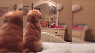 Mira la adorable reacción que tiene este perro al ver su reflejo en un espejo