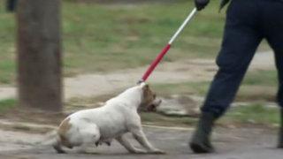 Condenan a prisión a dueño de pitbull que mató a un niño
