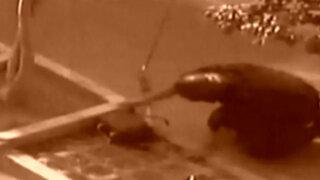 Centro de Lima: falsa alarma de bomba se registró en las afueras del JNE