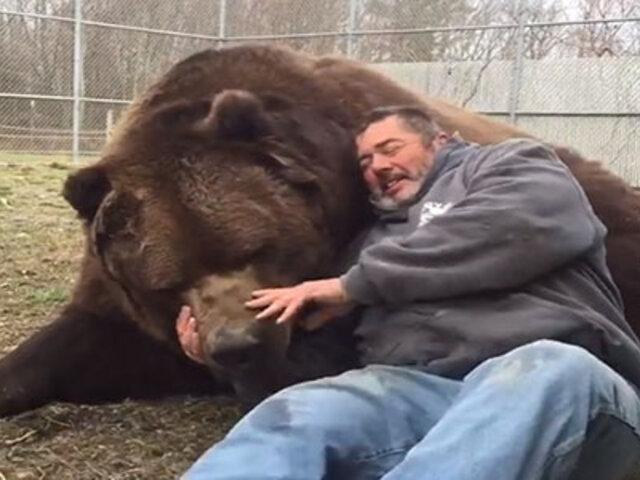 VIDEO: enorme oso juega inocentemente junto al cuidador de un zoológico