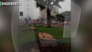 Vecinos de Los Olivos protestan por tala indiscriminada de palmeras