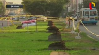 Alcalde de Los Olivos responsabiliza a municipio de Lima por tala de palmeras