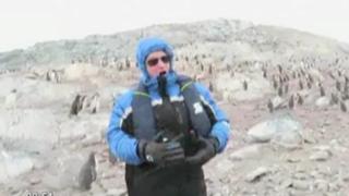 Pingüinos huyen 'espantados' al escuchar a famoso tenor