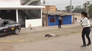 VES: envenenan y matan a seis perros para robar auto
