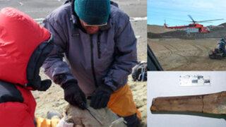 Antártida: descubren restos de un ave gigante que vivió hace 50 millones de años