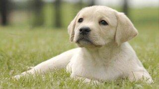 ¿Eres fanático de los perros? Estas son las 10 razas más populares en todo el mundo
