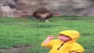 VIDEO: así fue el feroz ataque de un león a un niño en un zoológico de Japón