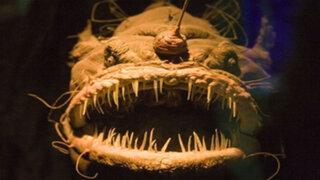 FOTOS: los 5 peces más terroríficos de las profundidades del océano