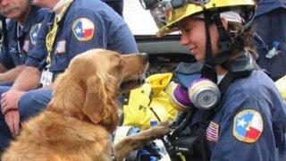 EEUU: muere última perra rescatista de atentado del 11 de setiembre