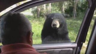 Familia se salva de morir por ataque de un oso