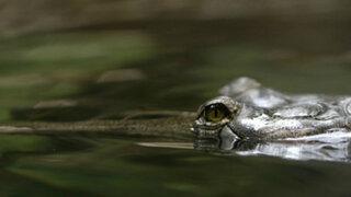 EEUU: cocodrilo mató a niño de dos años en laguna de Disney