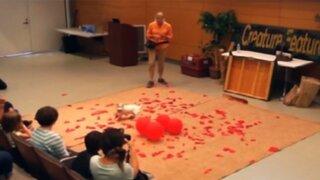 Perro rompe Récord Guinness por reventar 100 globos en 39 segundos