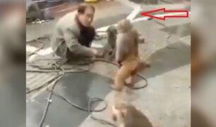Mono coge un cuchillo y ataca a un hombre en una calle de China