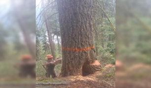 VIDEO: leñador salvó de ser aplastado por árbol mientras lo talaba