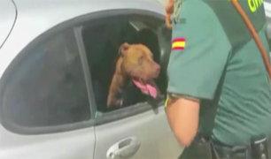 España: policía rescata a perro encerrado en auto