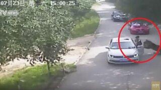 Mujer muere atacada por un tigre por salir de auto durante discusión con su amiga