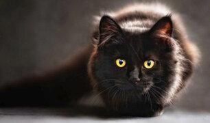 ¿Qué tanto sabes de los gatos?