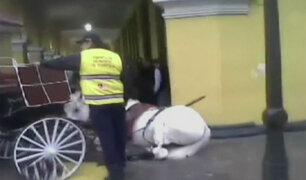 Caballo dejó 6 personas heridas en Jirón de la Unión