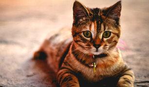 ¿Por qué agosto es considerado como el mes de los gatos?
