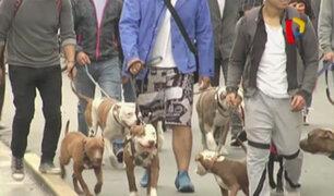 Realizan caminata en defensa de perros pitbull