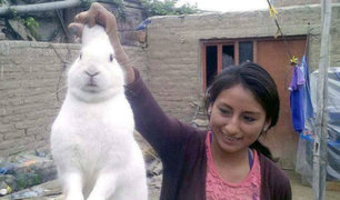 Huaura: Este conejo escapaba de su casa para consumir marihuana [FOTOS]