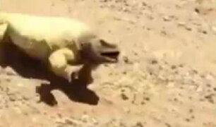 YouTube: Un pequeño lagarto muestra lo terrible que es el calor en el desierto de Arabia Saudita [VIDEO]