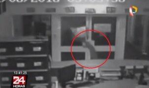 Australia: delincuentes roban escuela utilizando cocodrilos para asustar a vigilantes