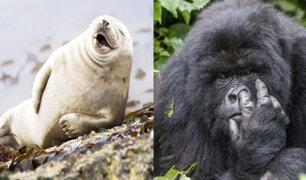 Concurso fotográfico: Inusuales y curiosas imágenes de animales