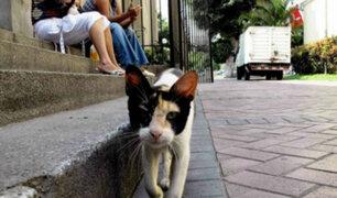 Parque Kennedy: activistas dirigen campaña de adopción de gatos