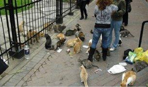 Controversia por proliferación de gatos en parque Kennedy