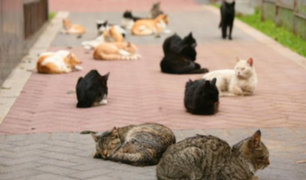 Miraflores: municipio busca impulsar adopción de gatos en parque Kennedy