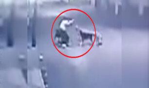 Colombia: feroces perros atacan a mujer