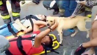 Colombia: perro socorre a su dueño herido tras accidente