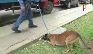 Brigada canina detecta origen de fallas eléctricas tras apagones