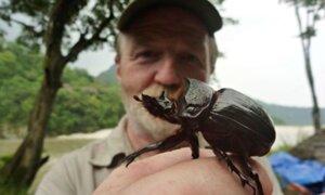 Conoce al científico que ama vivir en un hogar infestado de insectos