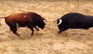 YouTube: Dos toros mueren de la forma más brutal en España tras embestir el uno contra el otro [VIDEO]