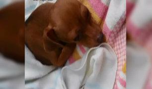 SMP: mujer denuncia supuesta mala práctica veterinaria