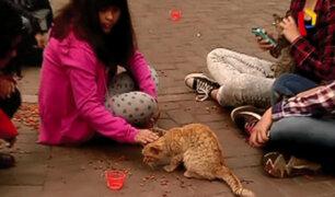 Miraflores: trasladan 100 gatos del parque Kennedy a albergue temporal
