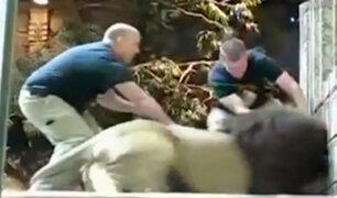 Verdaderos milagros: Ataques de animales salvajes que no cobraron víctimas