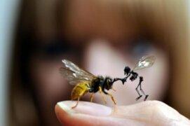 Artista británica crea diminutas esculturas con animales pero ¡muertos!
