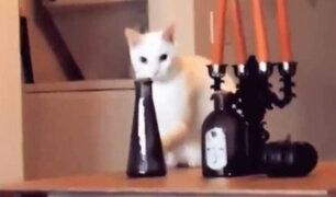 YouTube: Una gata es descubierta a punto de hacer una travesura y esto pasa [VIDEO]