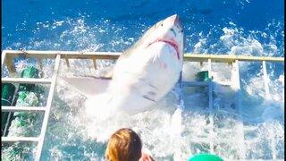 YouTube: Un tiburón desata el terror al romper la jaula de un buzo en México [VIDEO]