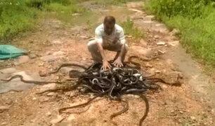 YouTube: Un hombre libera a 285 serpientes en escalofriantes imágenes [VIDEO]