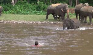 Tailandia: Elefante que se lanza a un río para rescatar a humano se hace viral