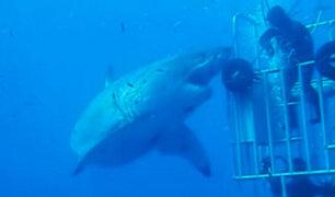 Buzos viven segundos de terror al ser atacados por un tiburón