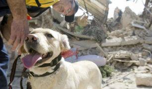 Comportamiento animal: ¿mascotas pueden predecir sismos?