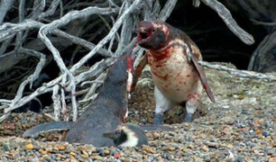 Twitter: Pingüino descubre 'infidelidad' y desata sangrienta pelea [VIDEO]