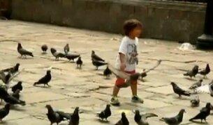 Descubre qué tan peligroso es el excremento de paloma para la salud