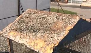 Callao: vecinos afectados por excreta de palomas